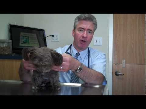 Benign tumors in dogs and cats.mp4