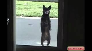 Собака Танцевака!АХАХ Пес Танцует! Самые смешные видео