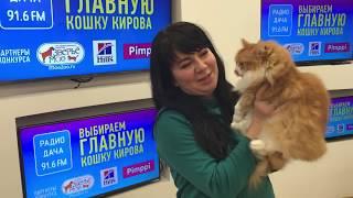 Радио Дача.   Главная кошка Кирова.