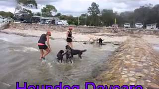 Seaside Scruffs At Hound Dog Daycare 7 1