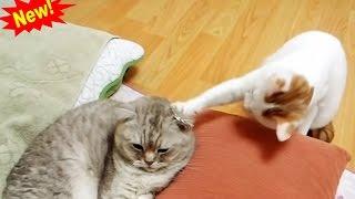 اضحك مع القطط - أضحك من قلبك - قطط مضحكة #1