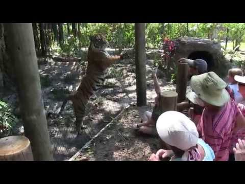 """Terrific Tigers"" Tiger Talk at the Palm Beach Zoo & Conservation Society"