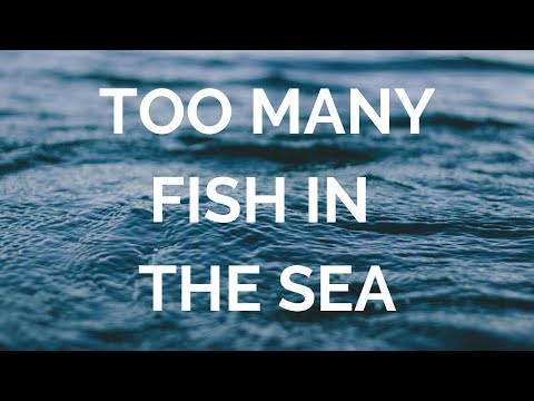 enough fish in the sea dating