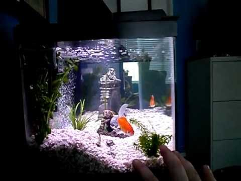 Nitrogen cycle and cloudy aquarium water explained what for How to cycle a fish tank