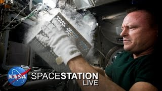 Space Station Live: Killing Bugs in Space