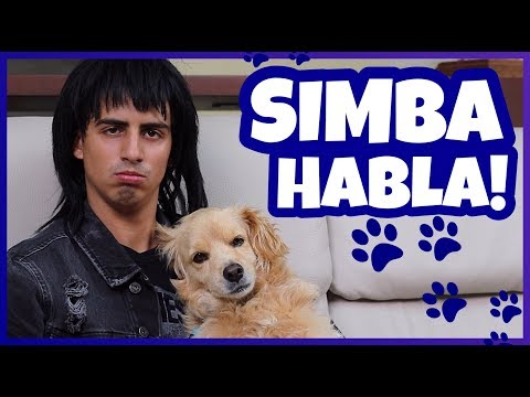 Daniel El Travieso - Mi Perro Simba Habló!