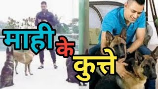 MS Dhoni was seen playing with his pet dogs at home Ranchi all dogs First time in Youtube