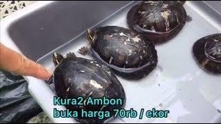 Bulan puasa beli kura2 Ambon dan ikan buntal di pasar ikan/ burung Jatinegara Part.1