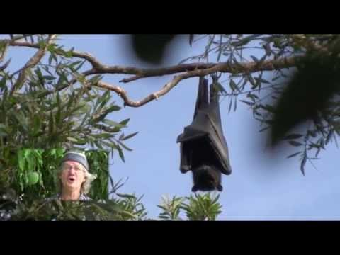 Underneath the Mango Tree (Round) - Ian Ross Williams