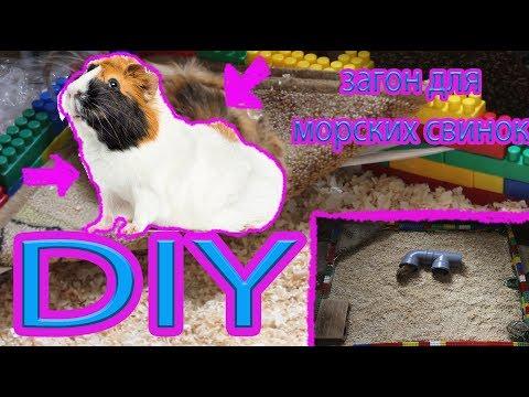 видео: diy загон для морских свинок за 5 минут !