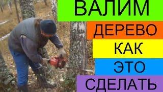 видео Как правильно спилить дерево бензопилой
