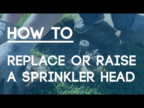 How To Replace Or Raise A Sprinkler Head The Right Way Youtube