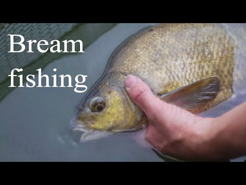 Fishing For Bream With Carp Tackle - States Lagoon Newlands Fishery