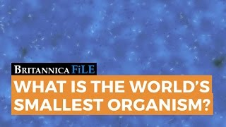 What is the World's Smallest Organism?