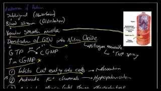 GTN - Mechanism of Action - Why we use GTN - Acute Coronary Syndrome