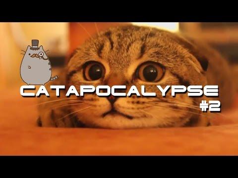 Best Cats Compilation \ Catapocalypse Coub #2 \ Приколы с котами \Котопокалипсис Coub #2