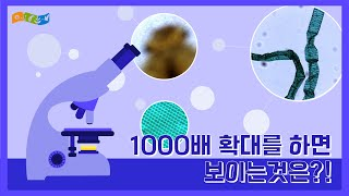 [교육]현미경으로 보는 1/1000의 세상
