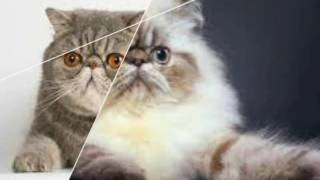 Красивые кошки разных пород