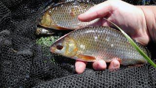 ВОТ ТАКИЕ КЛЕВАЛИ Рыбалка на поплавок ловля плотвы удочку в июне