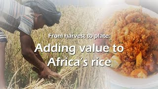 Adding value to Africa's rice