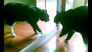Kot w lustrze ;-) / Cat in the mirror