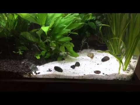 Amazing Maintaining Sand Substrate In An Aquascape