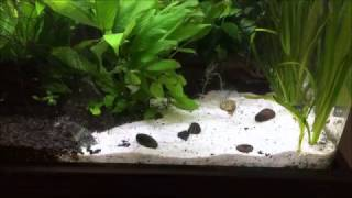 Maintaining sand substrate in an aquascape