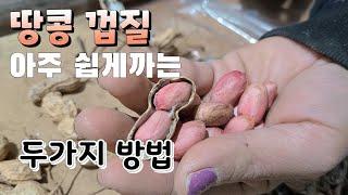 땅콩 껍질 아주 쉽게까는 두가지 방법 땅콩재배