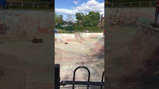 Новый любимец Twitter: пес, катающийся на скейтборде