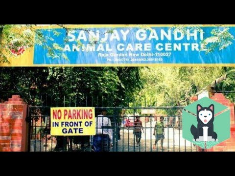 Information About Sanjay Gandhi Animal Care Centre