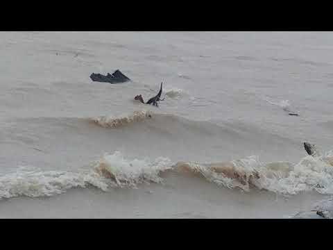 Hurricane Harvey effects on Lake Houston at Lakeview Park