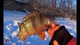 ТАКИХ КАБАНОВ СТОИЛО ИСКАТЬ!!!Крупный окунь! Рыбалка 2019 на безмотылку.Рыбалка на Оби.
