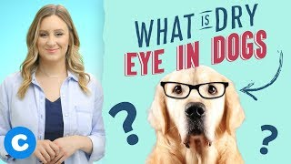 Dry Eye in Dogs and What You Can Do