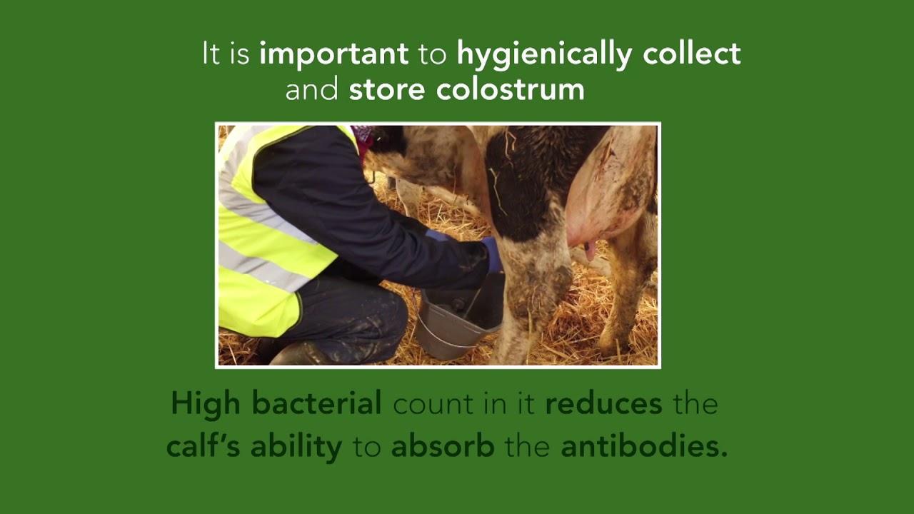 123 of Colostrum Management