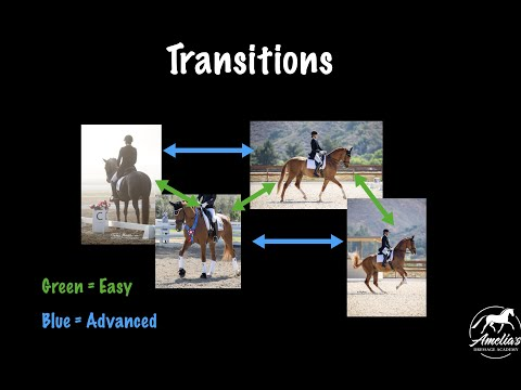 Transitions: A Good Way to Get Your Horse More Reactive