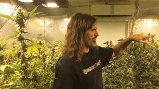Spectrum King LED Grow Tips | Recognizing Plant Symptoms