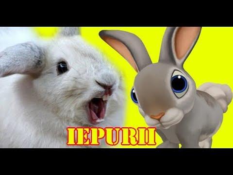 IEPURII - Informatii si curiozitati despre Iepure