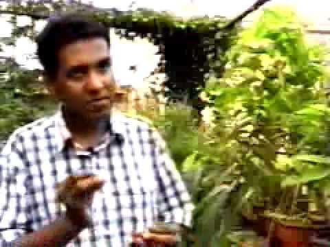 Tribal Communities Orissa Equator Prize Winner 2002 Asia
