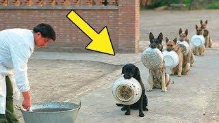 5 Unglaubliche Dinge, die man Hunden beibringen kann!
