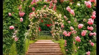 Арки в саду. Цветы и музыка для души. Flowers and music for the soul.