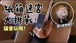 黃阿瑪的後宮生活-紙箱迷宮大挑戰-貓會玩嗎