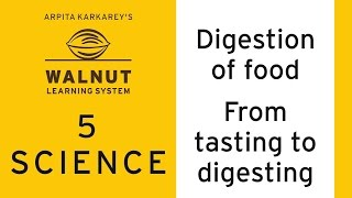 Video 5 Science - Digestion of food - From tasting to digesting download MP3, 3GP, MP4, WEBM, AVI, FLV Oktober 2018