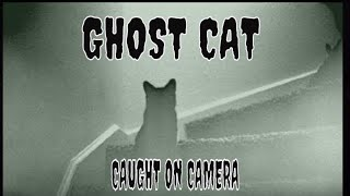 CAT GHOST CAUGHT ON CAMERA!! A MUST SEE!!