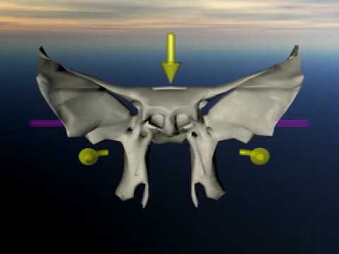 sphenoid in craniosacral movement - youtube, Human Body