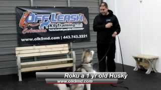 Husky Shows Amazing Transformation With Off Leash K9 Training, Columbia Md