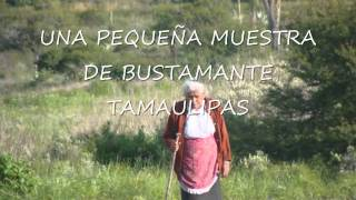 BUSTAMANTE tamaulipas_0002.wmv