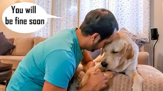 My Dog is Not Well | My Dog is Limping | Emotional Video