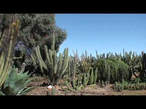 History of Cactus Country