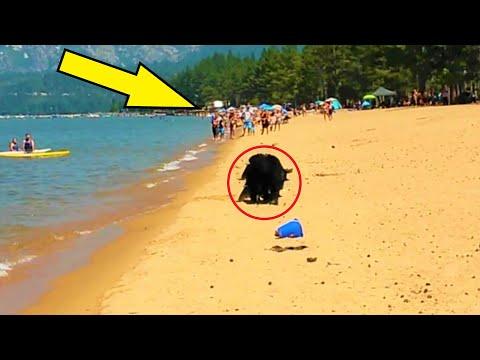 Отдыхающие бросились врассыпную, когда на пляже появились ОНИ!