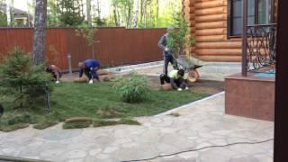 Укладка рулонного газона(Для укладки газона необходимо правильно подготовить поверхность, после чего правильно уложить рулонный..., 2016-05-19T12:13:52.000Z)